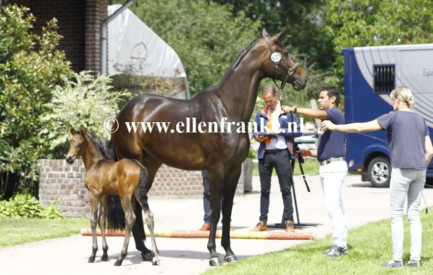 Bestelnummer 160720240 Menoraline (Daily Diamond x Rock Forever).JPG