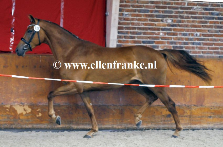 Bestelnummer 160720254 Minoraline vd Watermolen (Daily Diamond x Johnson).JPG