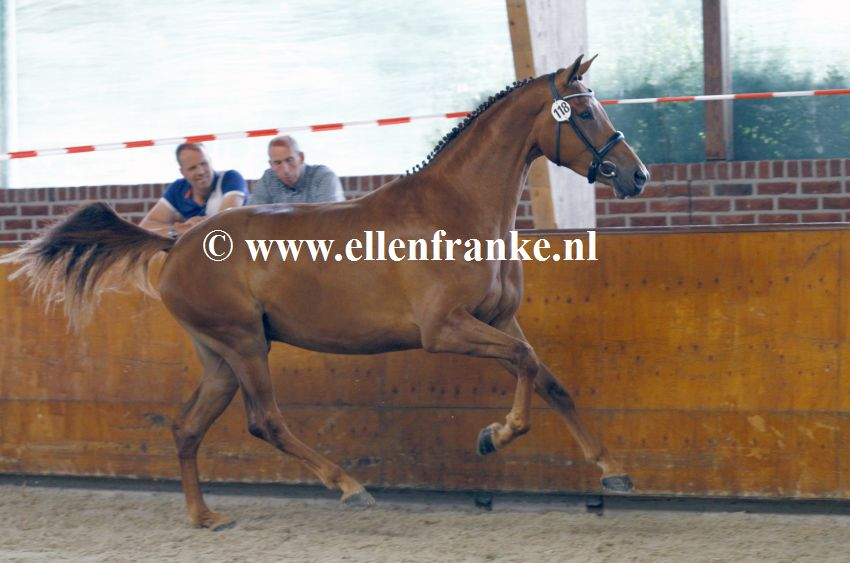 Bestelnummer 160720256 Minoraline vd Watermolen (Daily Diamond x Johnson)-002.JPG
